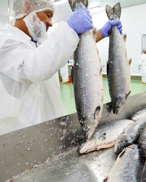 Seafood Importers, Exporters & Processing