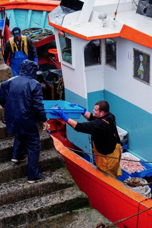 fisherman unloading fish